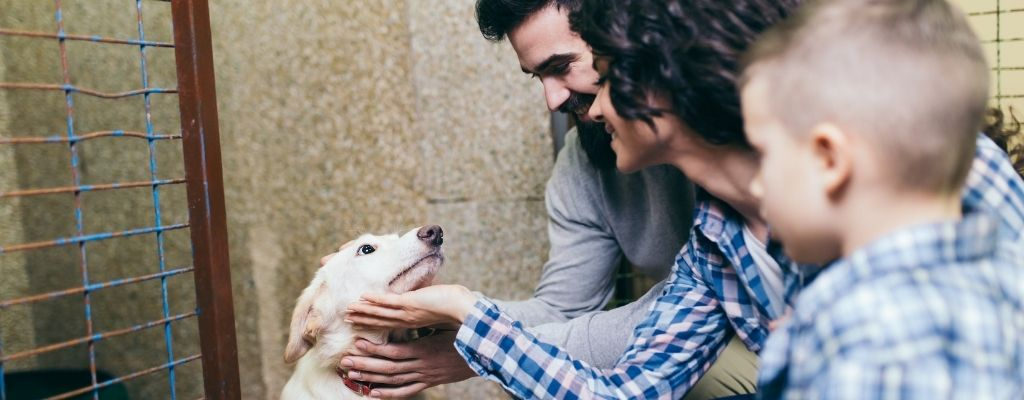 What You Need To Know Before Adopting a Shelter Dog