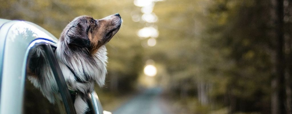 Road Trip Safety Tips for Dog Owners