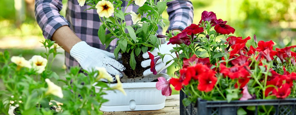 2 Tips For Organizing Your Home And Garden